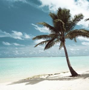 week in paradise